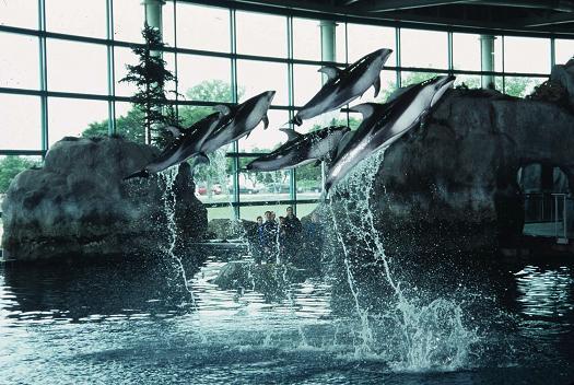 shed aquarium